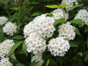 TerraUomoCielo alla 20° Fiera dei fiori di Piancogno (BS)