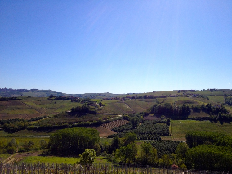 Langhe, Barolo, Wine