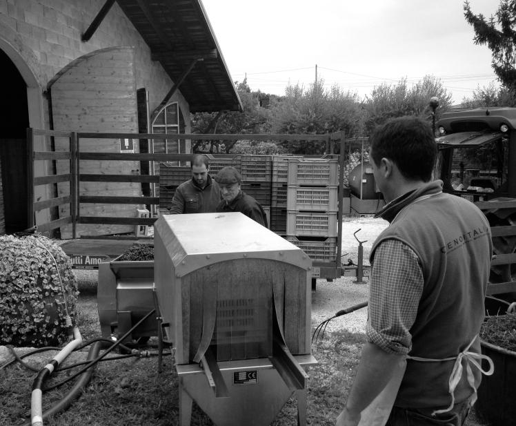 Camossi, Franciacorta, Wine