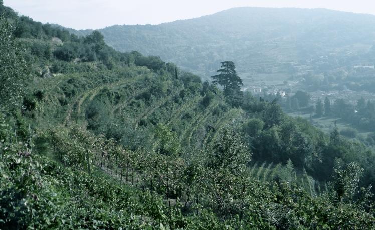 Franciacorta, Arici