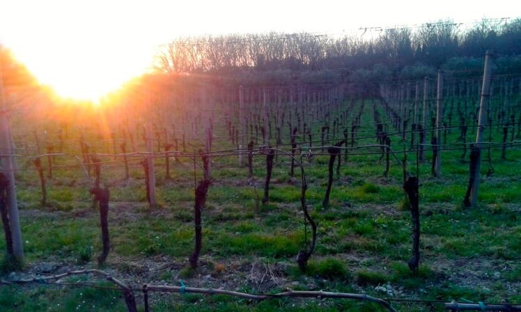 Franciacorta, Camossi, Erbusco, Wine