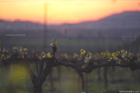 Primavera in Franciacorta